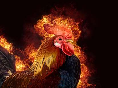 Chinese Horoscope - Fire - Rooster | photo: (c) byrdyak - stock.adobe.com