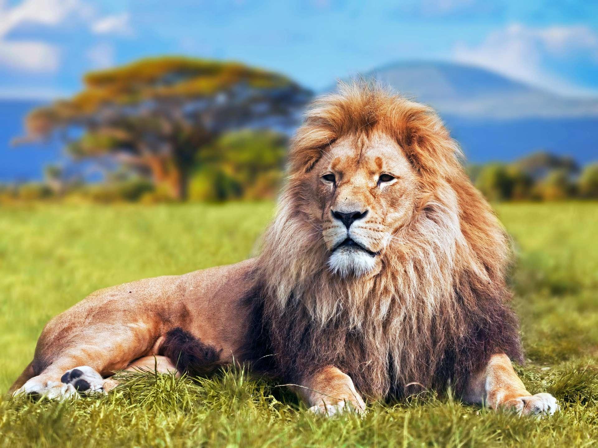 Zodiac Sign Leo Astrology Astrosofa Com