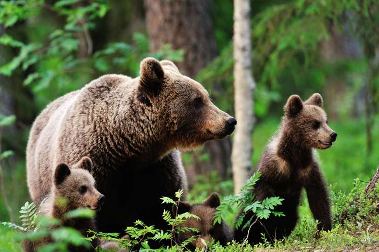 The lucky bears of the week | Photo: Erik Mandre - fotolia.com